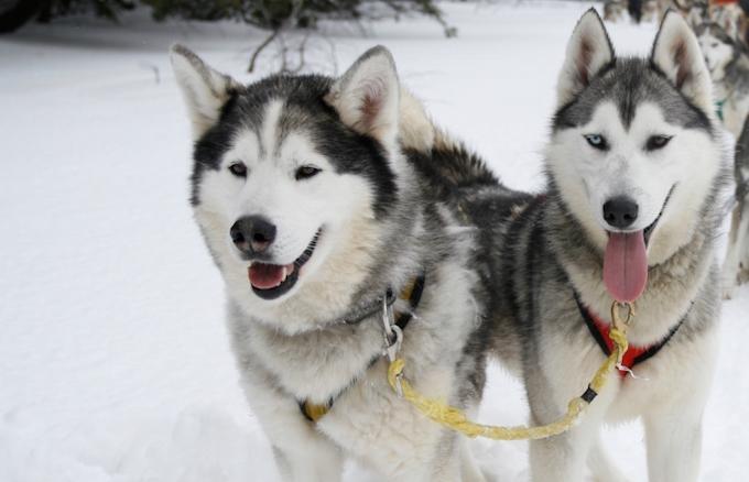 Chamonix Winter holiday(s), chamonix winter activities, husky sledding