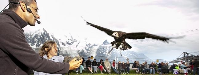 Dinner Birds Of Prey Show Chamonix All Year