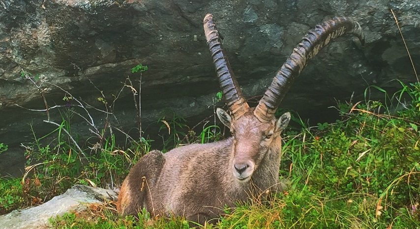 ibex Chamonix in Summer 854x467