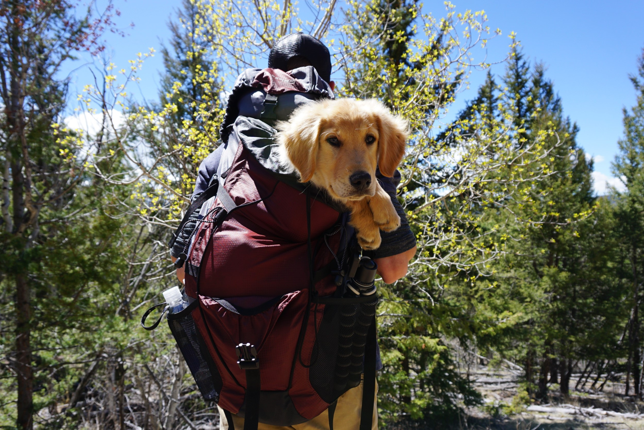 man-carrying-dog-on-red-backpack-1448056 Léman Express